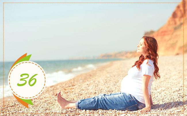 тридцать шестая неделя беременности