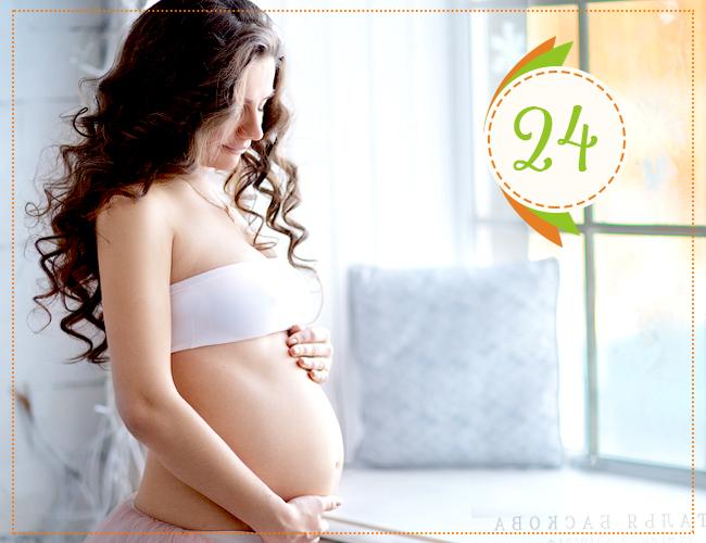 двадцать четвертая неделя беременности