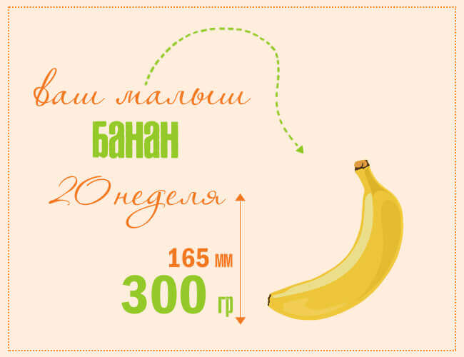 размер плода на 20 недели беременности