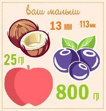 размер плода по неделям беременности