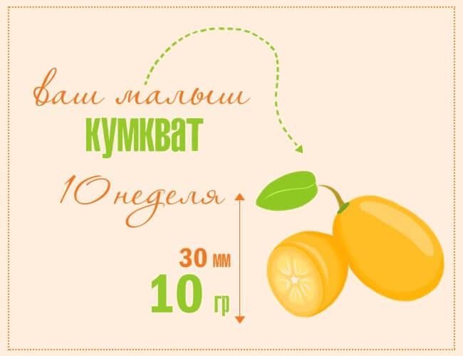 Размер плода на 10 неделе беременности